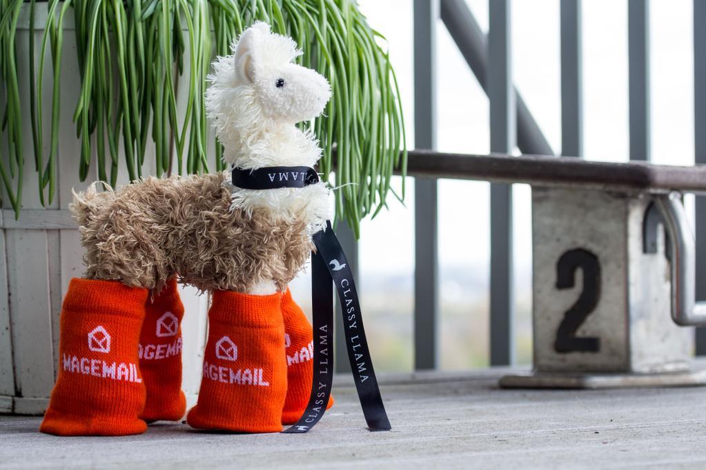 Ein Lama mit MageSocks. Das ist die Magento-Community. (c) @guido